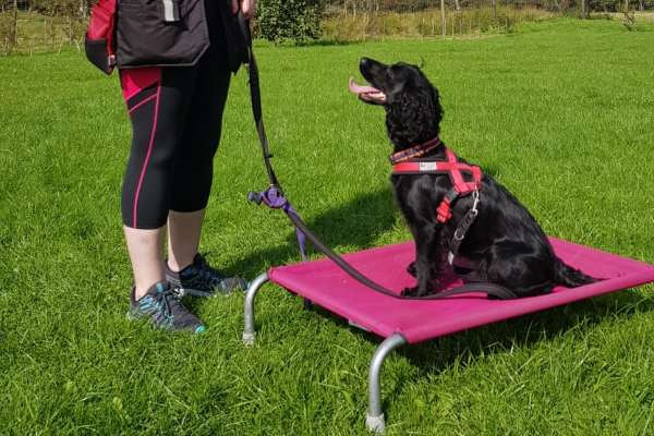 adult-dog-classes-in-edinburgh