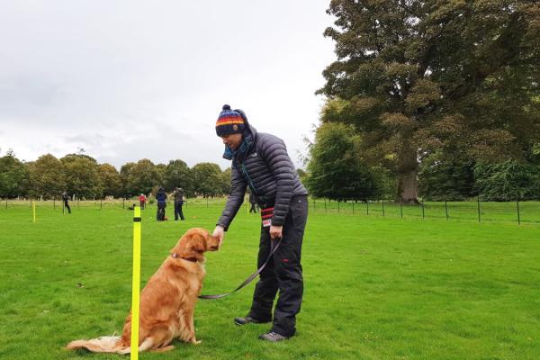 rescue-dog-training-edinburgh